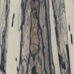 White Ebony (2) Furnier